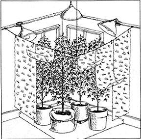 Cannabis - Les jardins à lumière naturelle